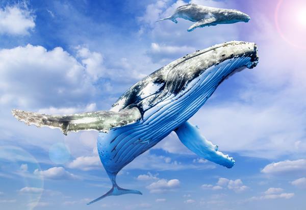 rwf_whale1