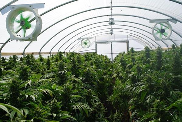 Medical Cannabis IOT Irrigation and fertilization system