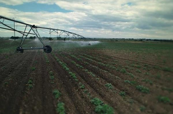 Made in the U.S.A. – Pure Spectrum / Colorado Cultivars' largest U.S. hemp farm produces USDA certified organic hemp phytocannabinoids.