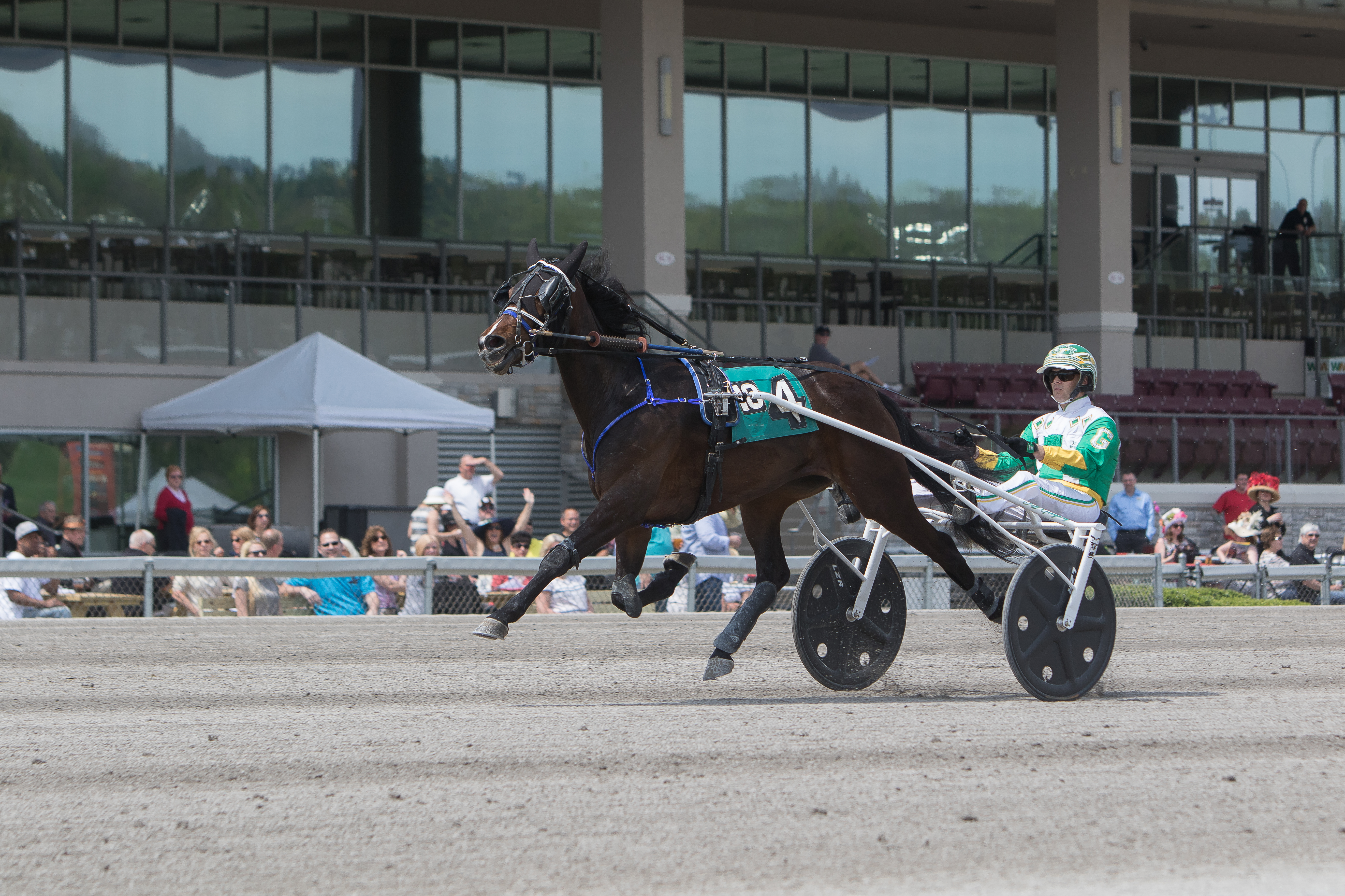 Live Harness Racing at The Meadows