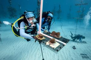 NFWF Celebrates 20 Years of Coral Reef Conservation, Announces $1.2 Million in New Grants - GlobeNewswire