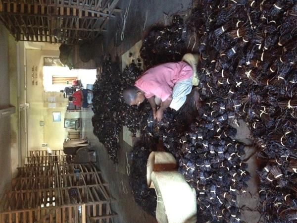 Weighing and Grading Vanilla at a farm in Madagascar.