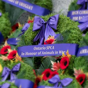 Wreath in honour of animals in war