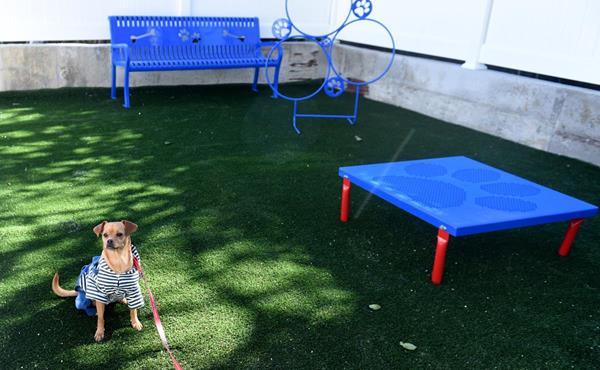 PALS Place pet play area