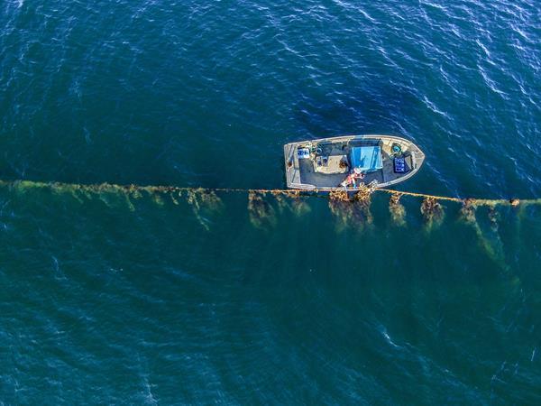 Las algas marinas, una solución modelo para combatir el cambio climático