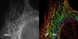 Super-resolution 3D imaging and tracking at the individual molecular level