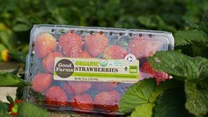 1_int_Strawberries_001b.jpg