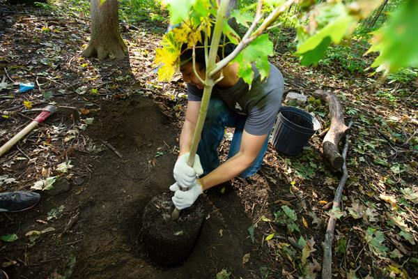 Volunteer Plants A Tree With Tree Canada And The Support of Green Hedge Realty Inc., Brokerage