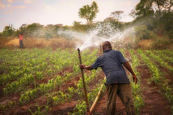 From irrigation systems to improved varieties, Ceres2030 will use state-of-the-art modeling to evaluate and aggregate research data so development interventions and investments can more effectively be applied to real and urgent agricultural problems. PROVIDED: IFPRI
