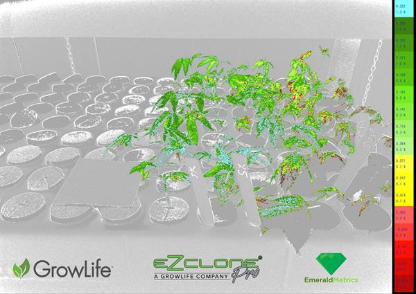 GrowLife_Emerald_EZClone