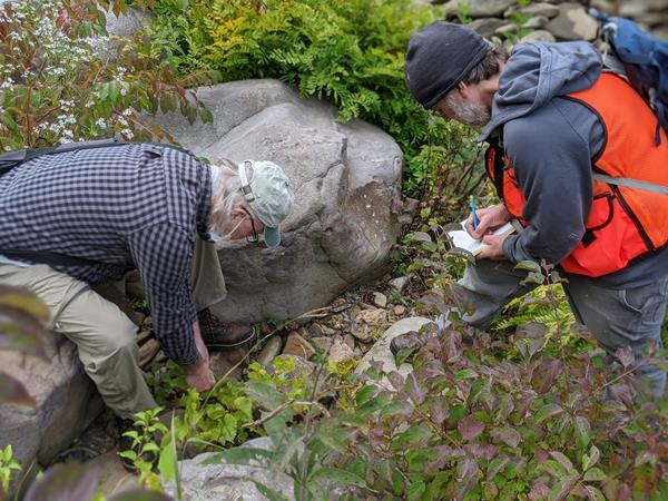 Pennsylvania Natural Heritage Program botanist Steve Grund and ecologist Christopher Tracey document an occurrence of rock grape (Vitis rupestris) along the Youghiogheny River in Fayette County, Pennsylvania. Photo credit should be given to Sarah Pears (volunteer).