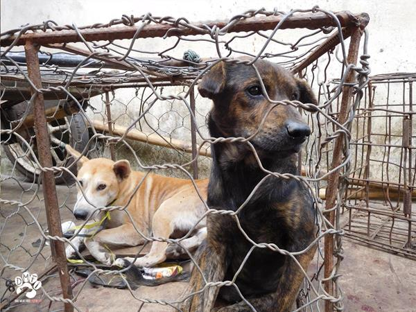 Dogs in cage awaits fate at Indonesia animal market