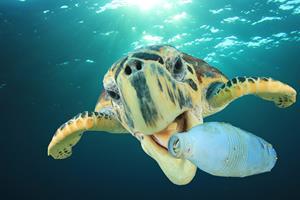 0_int_bigstock-Plastic-pollution-problem-Sea-228731458.jpg