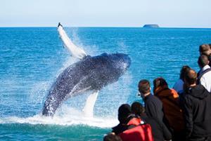 0_int_iceland-awakening-photos-humpback-breaching.jpg