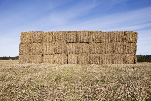Stacked hay bales wrapped with baler twine