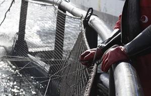 Aquaculture technician oversees fish in a net pen
