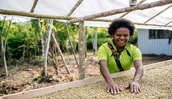 Ronah Peve, an extension office and member of the Highland Organic Agriculture Cooperative, checks on drying coffee at the Unen Choit Cooperative Society in Papua New Guinea. Photo by Josh Griggs.