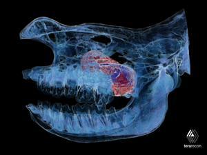 TeraRecon 3D Reconstruction of Rhinocerous CT Images