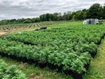 Aleafia Health - Port Perry Outdoor Cultivation
