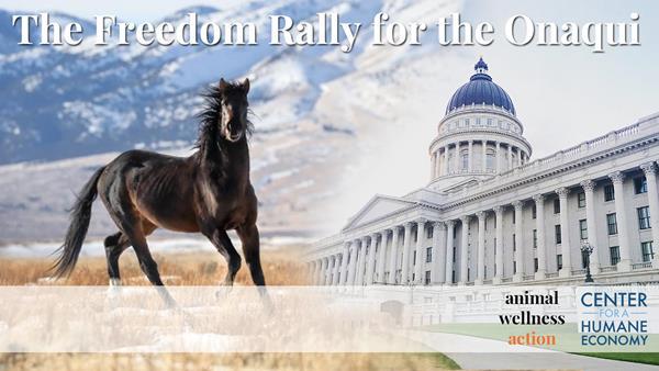 Graphic by Studio 5 USA | Photo: Jen Rogers, Wild Horse Photo Safaris