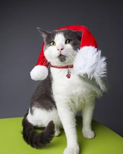 Help a cat this holiday
