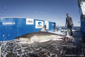 0_int_03032017_OCEARCH_Lowcountry_00617.jpg