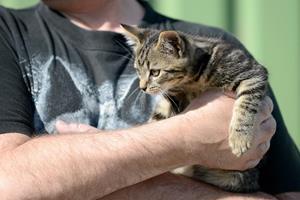 Kitten and Man Vertical.jpg