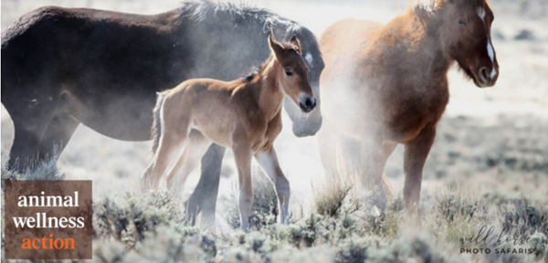 Photo Credit: Jennifer Rogers, Wild Horse Photo Safaris