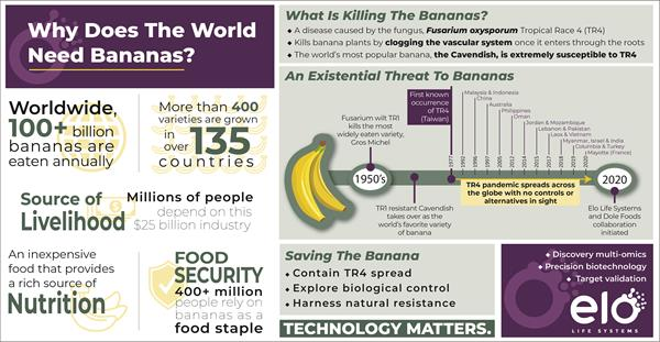 Why Does the World Need Bananas?