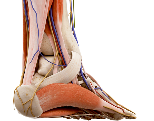 According to the results of a recent study published in Foot & Ankle International (FAI), professional athletes who experienced Achilles tendon (AT) rupture were unable to return to sport participation 24% of the time.