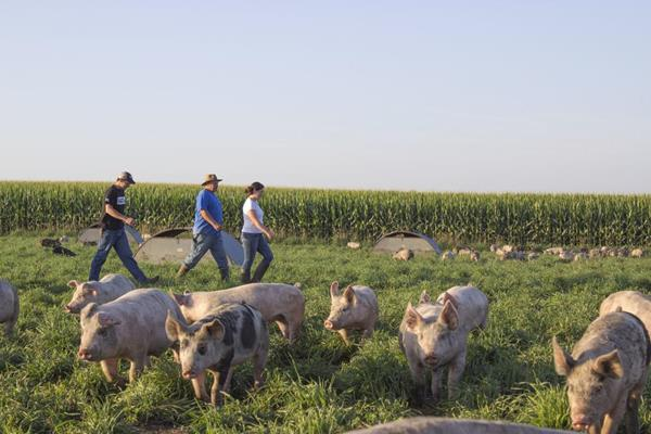 The Brown Family of New Providence, Iowa raise pigs for Niman Ranch.