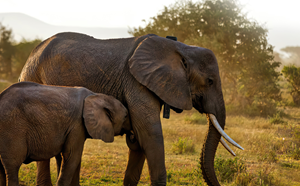 ORBCOMM and Africa Wildlife Tracking (AWT) in Action