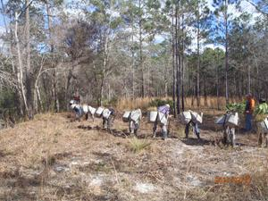 Arbor Day Foundation Reforestation Efforts