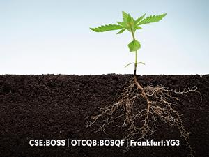 yield-growth-files-patent-for-method-of-extracting-hemp-root.jpg