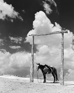 Navajo Pony, 1938, as taken by photographer Barry M. Goldwater.