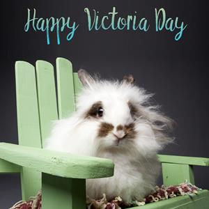 Victoria Day pet safety