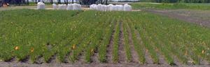 Yield10 Bioscience Winter Camelina Field Test