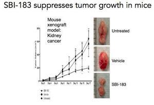 SBI-183 suppresses tumor growth in mice