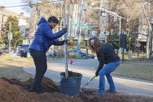 ups tree planting