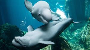 ATL Aquarium Hotel Package